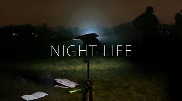Night life Youtube thumbnail V2.jpg